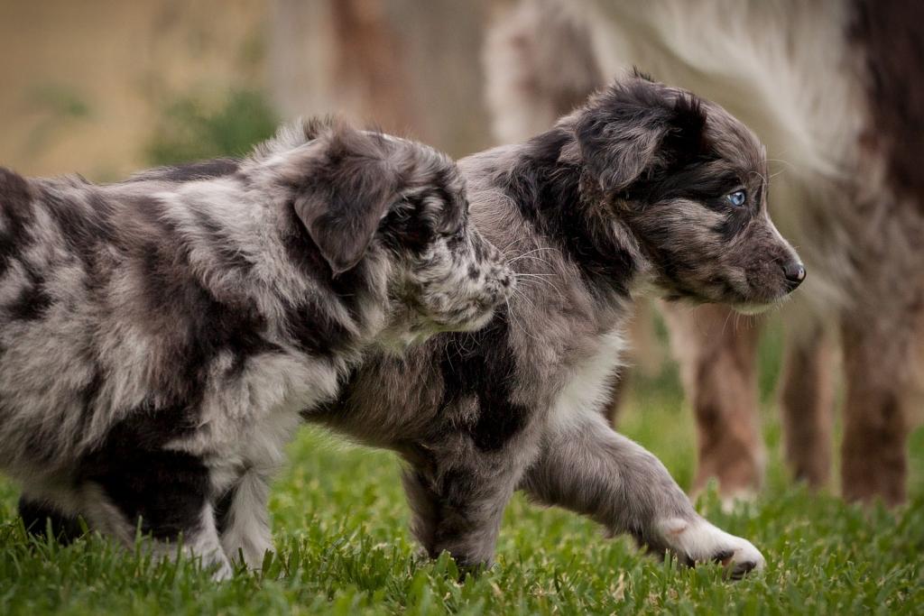 vitaldogs Hunde Welpen Seminarplanung