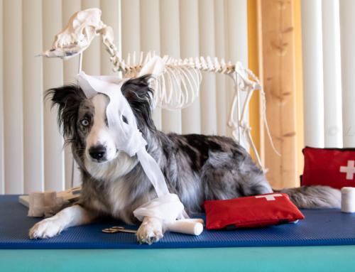 Tierphysiotherapie und Corona