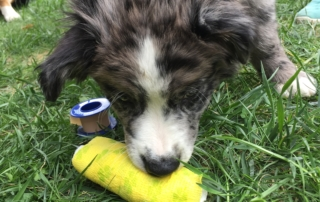 1. Hilfe Spiel- Loki - 10 Wochen