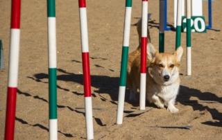 Sporthunde