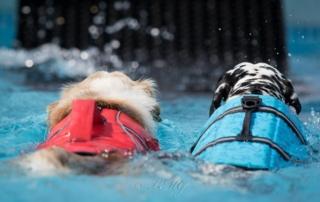 Zwei Hunde mit Schwimmweste