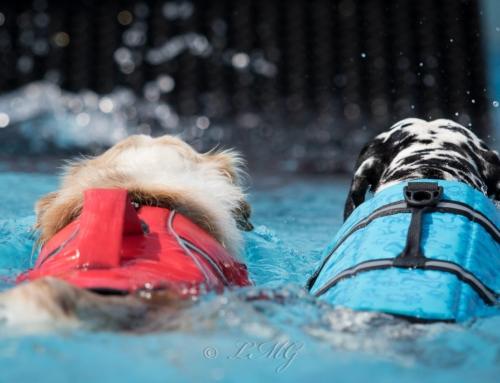 Schwimmwesten für Hunde – Der Sommer kommt!