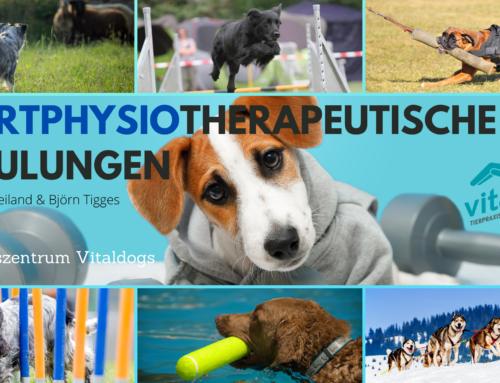 Hundesport: Sportphysiotherapeutische Schulungen